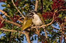 Fantastis 25 Gambar Burung Hinggap Di Pohon Richa Gambar