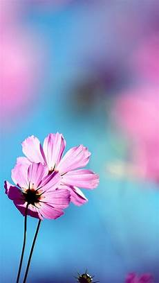 Pink Flowers Hd Wallpaper For Mobile