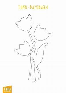 Malvorlagen Kostenlos Tulpen Tulpen Malvorlage Ausmalbild Zum Ausdrucken Talu De