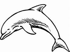 malvorlage delfine ausmalbilder q3o6j