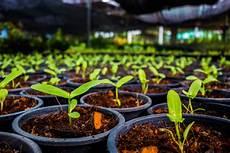 le pour plante 18550 l inde plante 66 millions d arbres pour lutter contre le r 233 chauffement climatique