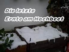 Letzte Hochbeeternte Und Hochbeet Winterfest Machen