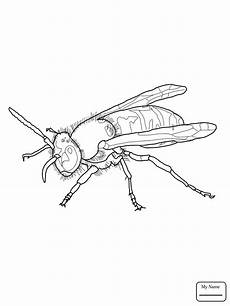 yellow jacket drawing at getdrawings free