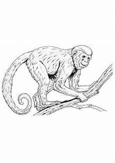 lustige ausmalbilder affen ausmalbild junger schimpanse zum kostenlosen ausdrucken