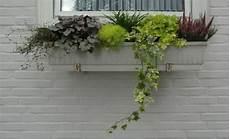 ganzjahresbepflanzung für balkonkästen bepflanzung kasten winterhart schattig mein sch 246 ner