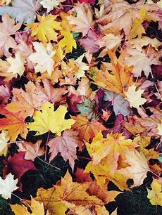 Iphone Vsco Fall Backgrounds
