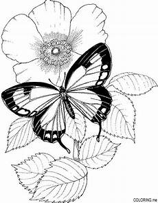 flower coloring page flower coloring pages butterfly