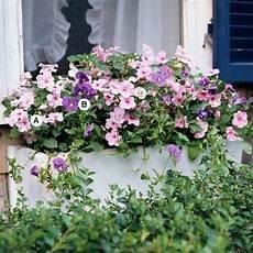 balkonkästen bepflanzen ideen ideen f 252 r fenster blumenkasten dazzler pink test