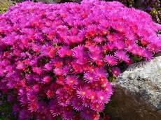 pflanzen für trockene sonnige standorte trockener standort und trockene b 246 den