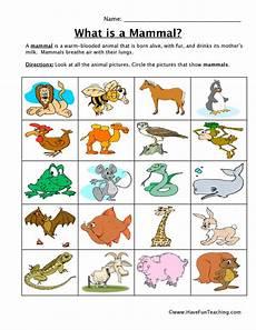 animals classification worksheets 13819 mammal classification worksheet