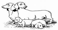 Hunde Ausmalbilder Dackel Hunde Ausmalbilder 14 Ausmalbilder Malvorlagen