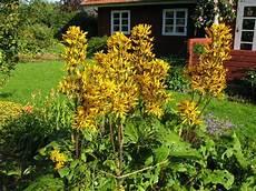 stauden richtig pflanzen winterharte stauden f 252 r