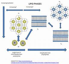 1 5 lipid aggregates from single and double chain hiphiles biology libretexts