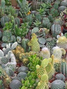giardini piante grasse per esterno piante grasse un giardino deserto a casa tua