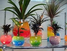 Jual Hidrogel Bening Media hidrogel untuk tanaman dan berbagai keperluan lainnya