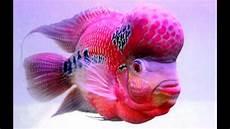 Gambar Wallpaper Ikan Cantik A1 Wallpaperz For You