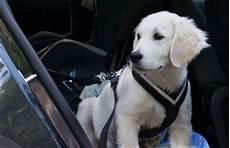 167 28 tiere der strassenverkehrsordnung stvo hund im auto