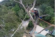 couper un arbre 12261 spectaculaire intervention pour couper les branches d un arbre 224 40m de haut