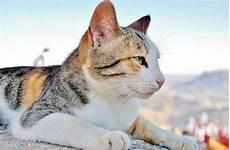 wurmkur bei katzen ratschl 228 ge wie sie ihre entwurmen