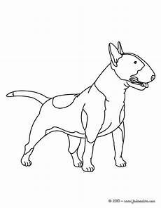 dessin bull coloriages bull terrier fr hellokids