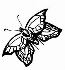 Insekten Malvorlagen Tiere Insekten 00223 Gratis Malvorlage In Insekten Tiere Ausmalen