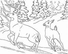 Gambar Kuda Poni Yang Belum Diwarnai Tempat Berbagi Gambar