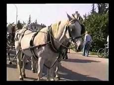 carrozze e cavalli carrozze e cavalli a mogliano