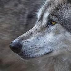 hund trifft wolf freund oder feind pfotencafe leben