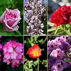 tutti i fiori cuoche dell altro mondo 3 giorni di mostra mercato