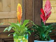 5 plantes d int 233 rieur fleuries faciles planter des