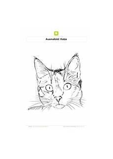 Katzengesicht Malvorlage Ausmalbilder Katzen Kostenlose Ausmalbilder