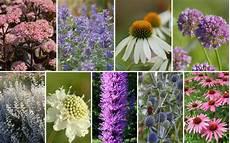 pflanzen für bienen und schmetterlinge ein f 252 r bienen und schmetterlinge 12er kollektion