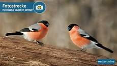 einheimische vögel im winter fotostrecke heimische v 246 gel im winter wetterticker