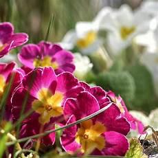 Blumen Beete Und Prokrastination Gartenrundgang Im