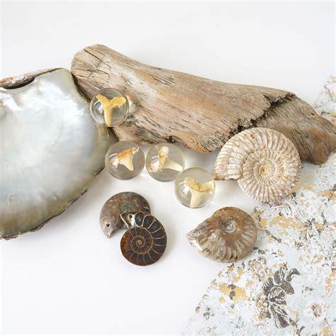 Fossil I Spiralform
