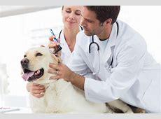 low cost vets near me