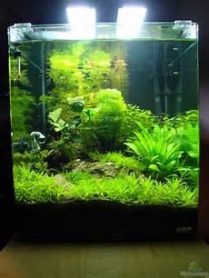 60 liter becken aquarium christoph luz nano cube 60 liter