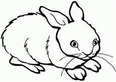 kaninchen malvorlagen ausmalbilder