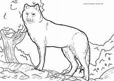 Malvorlagen Wolf Malvorlage Wolf Ausmalbilder Ausmalen Und Malvorlagen
