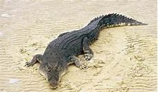 Mengenal Hewan Reptil Ciri Ciri Dan Jenisnya Berdasarkan