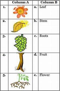 types of plants worksheets for grade 2 13744 plants and trees evs class i theeducationdesk environmental science environmental