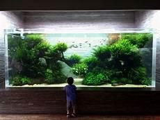 ada aquascape still stunning ada designed and maintained