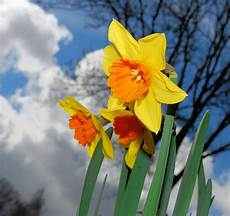 Fotos Gratis Flor P 233 Talo Florecer Primavera Bot 225 Nica