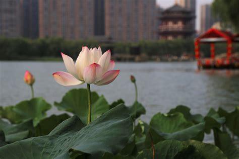 Lotus Bilder
