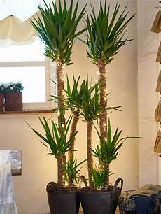 something a bit different decorate your houseplant the