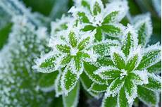 a record breaking winter will our plants survive