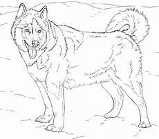 Ausmalbilder Hunde Husky Husky Coloring Pages Blogx Info Blogx Info