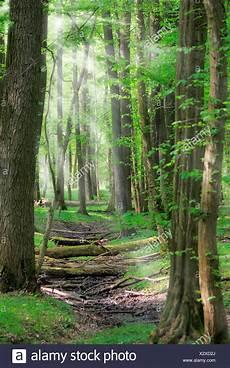 Laub Wald Bei Gegenlicht Mit Sonnenstrahlen Deutschland