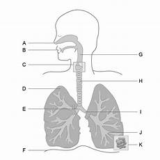 science worksheets respiratory system 12369 9 best school images on science physical science and homework checklist