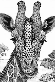 Ausmalbilder Erwachsene Giraffe Giraffe Portrait Matted Print From Original Drawing